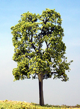 Samtrees - We supplies best quality miniature model trees